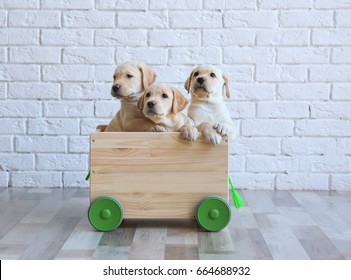 Cute labrador retriever puppies with wooden cart at home
