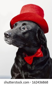 3c273918dc2 cute labrador in top hat and bow tie