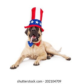 A cute large Mastiff dog laying against a white backdrop with his tongue hanging out and wearing a sparkly red, white and blue bow tie and a festive tall hat for the Fourth of July