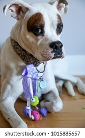 Cute large white boxer dog dressed up in pastel colored bells for Easter