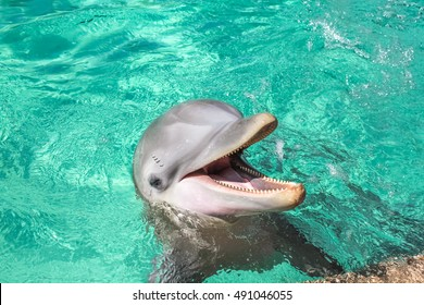A cute laughing dolphin in the water pool.