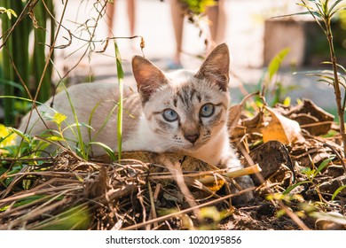A cute laying cat