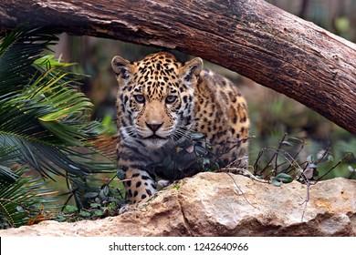 cute leopard puppy