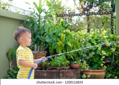Cute little Asian 2 year old toddler boy child having fun watering the plants from hose spray in the garden at home in the sunny morning, Little home helper, chores for kids, child development concept