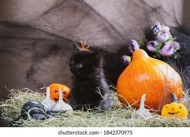 Cute little black kitten for Halloween