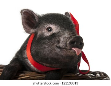a cute little black pig sitting in a basket