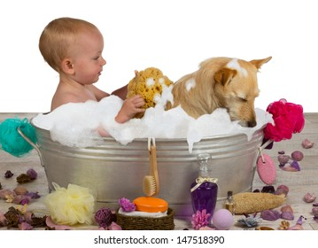 Cute little blond girl having fun bathing with her dog in a metal bathtub filled with soapy bubbles as she lovingly rinses the golden jack russel terrier off with a sponge