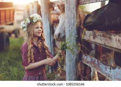 Cute little blonde girl with wreath of flowers playing  near horses ponies in the stables over sunset