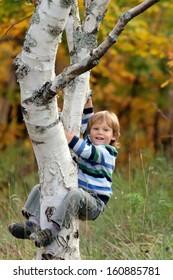 Cute little boy climbing on the tree