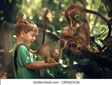 Cute little boy is feeding monkeys in Dominican republic. Image with selective focus and toning.