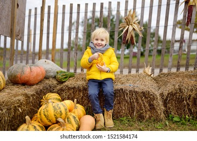 Cute little boy having fun on agricultural farm at autumn. Child holding decorative pumpkin. Pumpkin is traditional vegetable used on American holidays - Halloween and Thanksgiving Day.