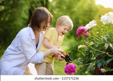 Cute little boy with his young mother working together with secateur in domestic garden. Farming, gardening and childhood concept