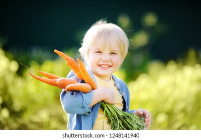 Cute little boy holding a bunch of fresh organic carrots in domestic garden. Healthy family lifestyle
