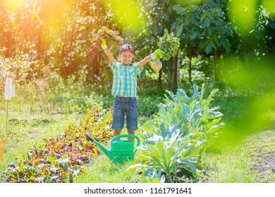 Cute little boy holding a fresh organic carrots in domestic garden. Healthy family lifestyle