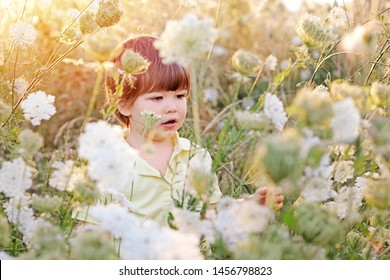 Cute little boy hunting for butterfly in the wild summer meadow with wild white flowers at sunset. Summer lifestyle. Carefree childhood.