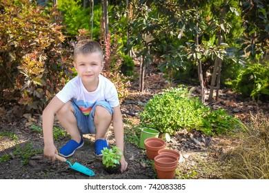 Cute little boy setting plant in garden