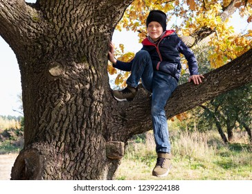 Cute little boy sitting on branch of big tree on sunny autumn day
