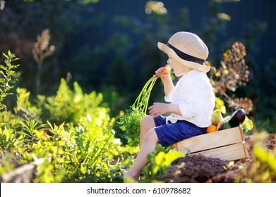 Cute little boy in straw hat eating organic carrot sitting on wooden crate with fresh vegetables