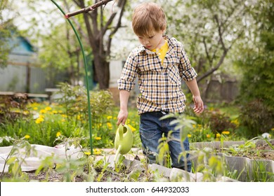 Cute little boy watering plants with watering can in the garden. Adorable little child helping parents to grow vegetables  outdoors.