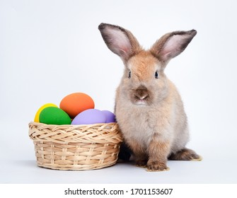 Cute little brown rabbit and a basket with Easter eggs. On a white background. Festival concept