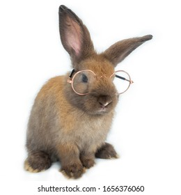 Cute little brown rabbit with two ears high up wearing golden frame glasses sitting isolated on square white background.