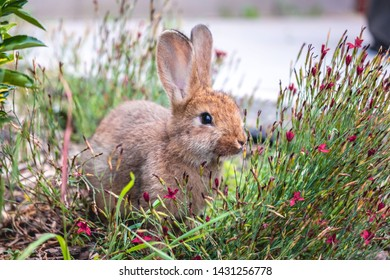 Cute little bunny covered in flowers