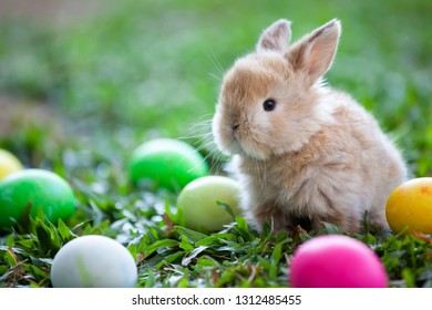Cute little bunny and easter eggs in the meadow