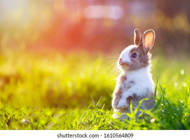 Cute little bunny in grass with ears up looking away