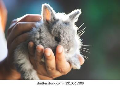 Cute little bunny rabbit in hands