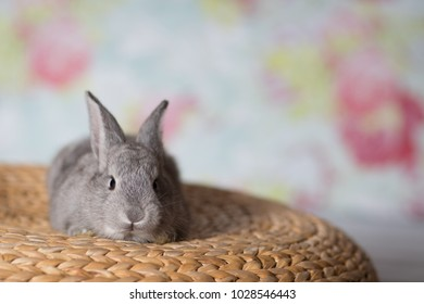 Cute little bunny rabbit with space for text