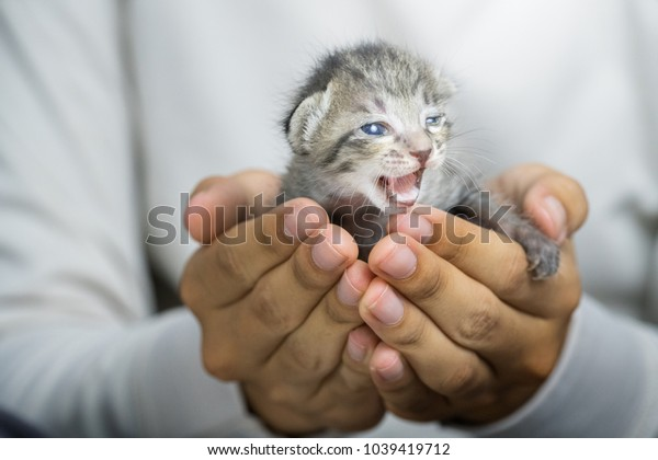 cute little cat in human hands