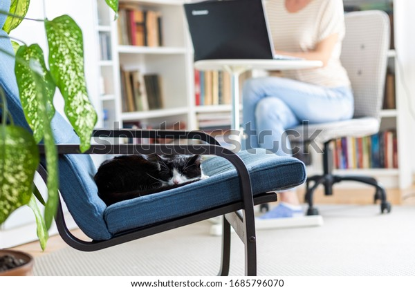 cute little cat sleeping in an armchair woman working from home in the background stay home and healthy coronavirus