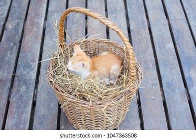 Cute little cat sleeping in an easter basket