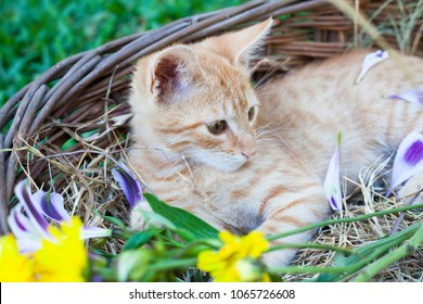 Cute little cat in wicker basket with flowers on green grass outdoors.