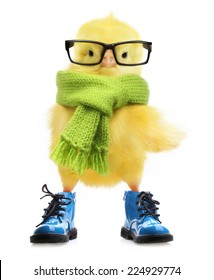 Cute little chicken in scarf, boots and eyeglasses on white background