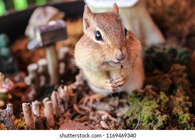 Cute little chipmunk being attentive in miniature surroundings