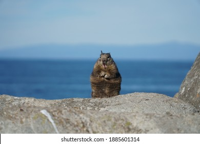 A cute little critter living by the ocean on the west coast of California.