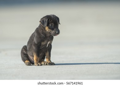 Cute little dog