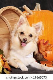 Cute little dog in autumn basket