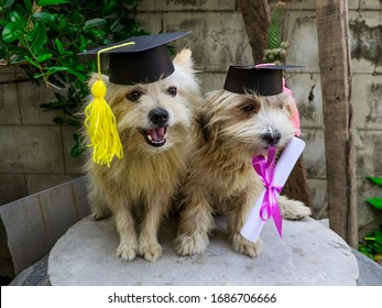 Cute little dog with graduation hat and graduated diploma dog,copy space. back to school concept.