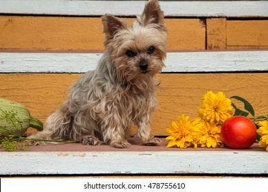 cute little dog guarding the fall harvest
