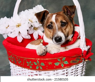 Cute Little Dog in Holiday Basket