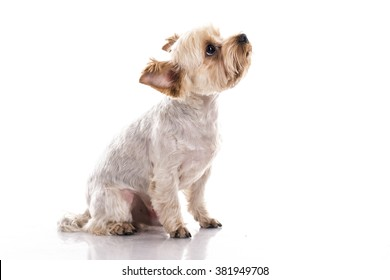 cute little dog on a white background
