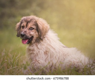 Cute little dog playing outdoors in the park.