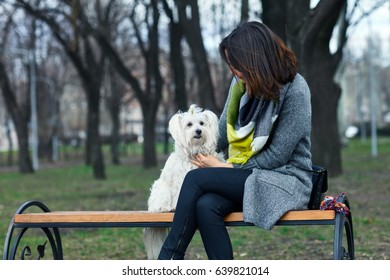 Cute little dog playing with owner outdoors