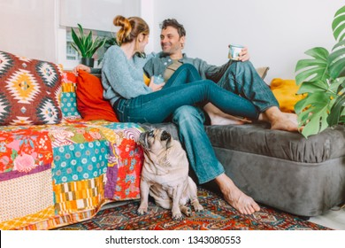 cute little dog pug sitting on the carpet looks wistfully at his owner's which are relaxing on the sofa