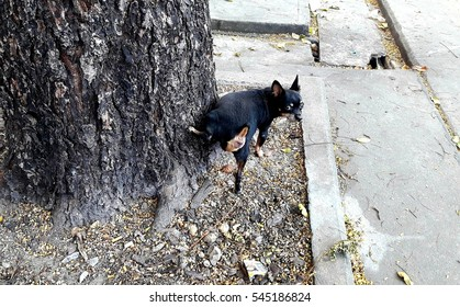 Cute little dog riding on a big tree in a park.