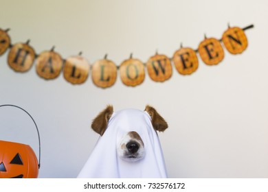 cute little dog sit as a ghost for halloween on bed at home. Pets indoors
