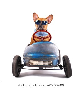 cute Little dog with sunglasses have fun in a pedal car