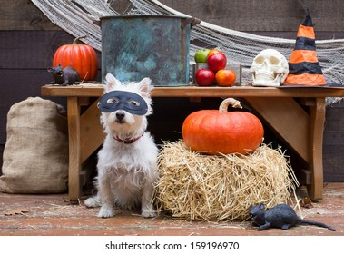 A cute little dog wearing a mask ready for the apple bobbing to begin at a Halloween party in a barn.